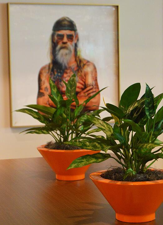 Ann Arbor office plants